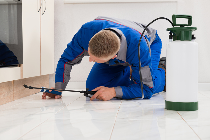 Consider These Things before Hiring a Pest Control Service